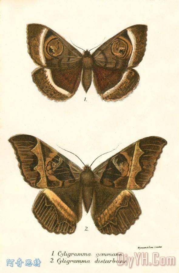 蝴蝶装饰画图片