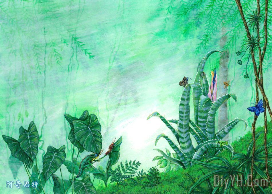热带雨林的生物.油画定制