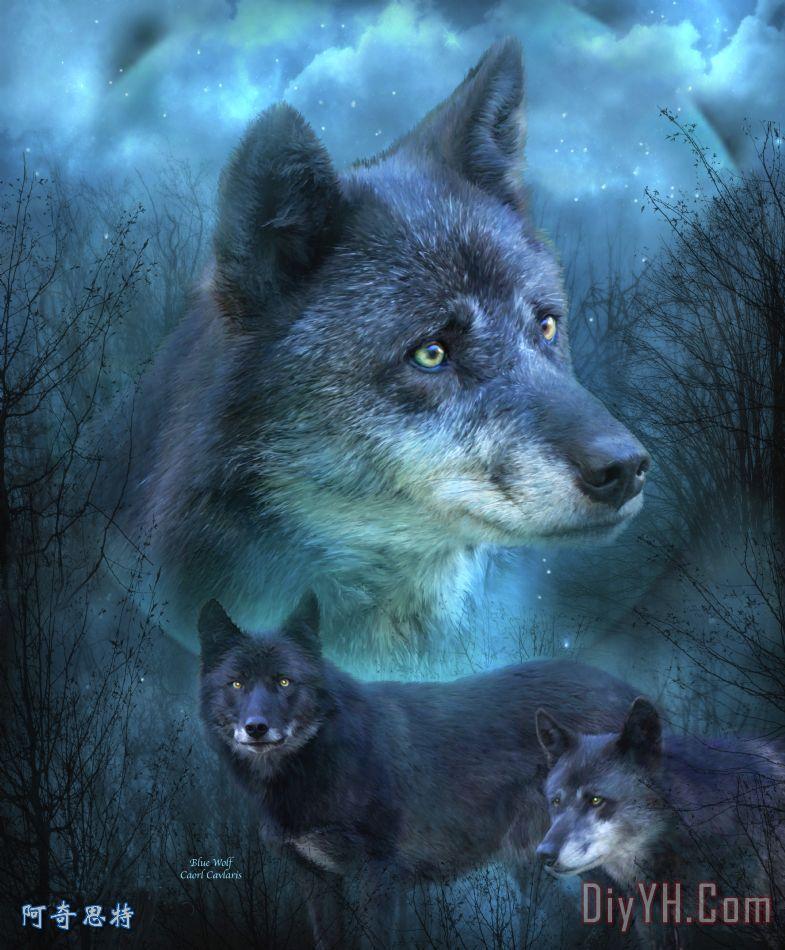 加入收藏夹 分享:      关键字:狼  相关分类:动物