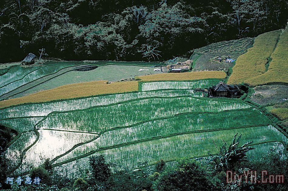稻田在巴厘岛装饰画 |