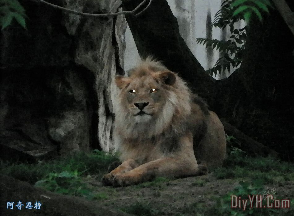 狮子在黑暗装饰画