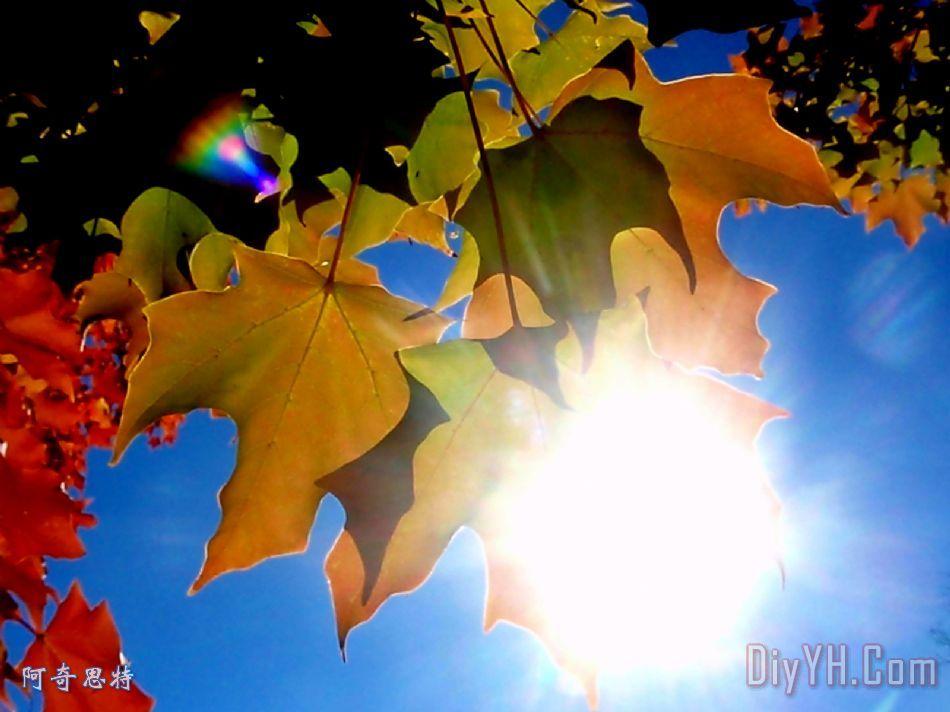 阳光和秋天的树叶装饰画